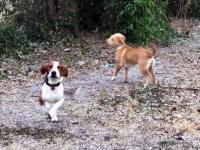 Urocza reakcja psów na pierwszy śnieg