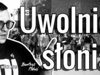 520 - UWOLNIĆ SŁONIA - rzecz o Jerzym O. / historia WOŚP
