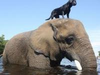 Zwierzęta które pomogły lub uratowały inne zwierzęta - kompilacja