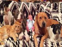 4 psy i kot oczekują nowego członka rodziny