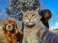 Nawet zwierzęta robią już sobie selfie