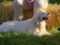 Jak reagują psy na płacz obcej im osoby?