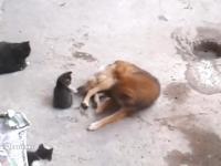 Kotka zabiera swoje młode w odwiedziny do starego znajomego