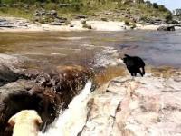 Pies ratuje swojego ziomeczka