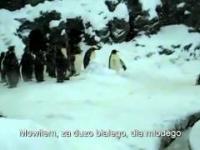 Pingwiny po imprezie