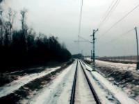 Stado jeleniowatych przekracza torowisko kiedy nadjeżdża pociąg