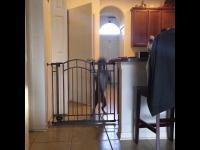 Pies skacze przez matrową bramkę