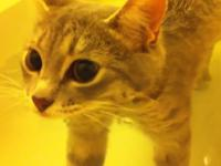 Kot podczas kąpieli