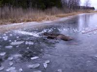 Dobrzy ludzie pomagają klempie wydostać się z lodowatej pułapki