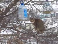 Extremely skilled kot kradnie smalec z karmnika dla ptaków