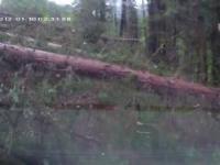 Las spadł na samochód