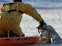 Kompilacja ludzi, którzy ratują zwierzęta