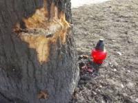 Znicz przy drzewie, na którym rozbiła się limuzyna z premier Szydło