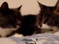 Para kotów gadających o jedzeniu