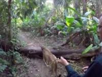 Maciej w Dżungli - Trailer
