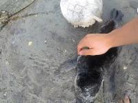 Zagubiona mała foka
