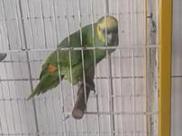 Papuga która potrafi śpiewać jak Rihanna