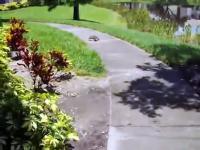 Jak szybko biec może żółw?