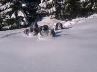 Zgraja słodkich łobuziaków hasająca w śniegu