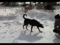 Pies olał właściciela! :)))