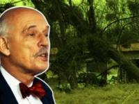 Hurtowa wycinka drzew -- teoria Korwina