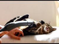 Bobo - kot, który uwielbia być odkurzany