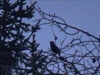 Wspaniała ptasia pobudka
