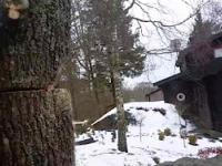 Technika powalenia drzewa na