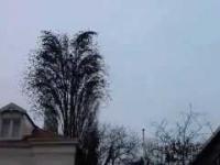 Stado ptaków w jednym czasie odlatuje z drzewa