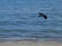 lecący ptak nagrany w slow motion