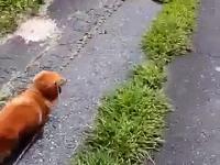 Właściciel psa udaje że nagle zemdlał i nagrywa niesamowitą reakcję psa