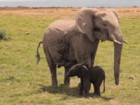 Dramat małego słonika