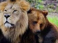 Niesamowita Przyjaźń Między Zwierzętami - Kompilacja 2017