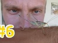 6 AUSTRALIA autostopem - W aucie czuć MARIHUANĄ