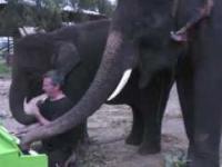 Słoń Piotras odkrywa pianino