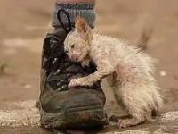 Kiedy człowiek pomaga zwierzętom ★ czyli pomaganie barciom naszym mniejszym  ★