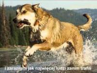 Piękny hołd dla psa - Denali