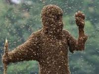Człowiek pszczoła w metrze / Bee-man in subway
