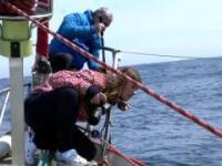 Odc. 03 Dogonić Horyzont: Nieprzewidywalne morze i... wieloryby.