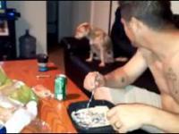 Honorowy pies. Mimo że miał ochotę na jedzenie, to nie poprosił...