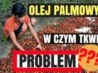 Olej Palmowy - W czym tkwi problem? | WegaFitness