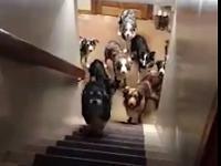 Psy grzecznie czekają przy schodach na swoją kolej