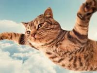 Śmieszne koty 9