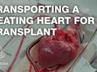 Transport serca do transplantacji