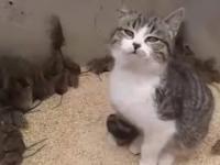 Kot zamknięty ze stadem myszy