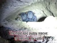 Piękny ratunek szczeniaków 10 metrów wgłąb ziemi
