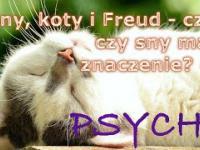 Sny, koty i Freud - czyli czy sny mają znaczenie? 7 Psyche