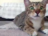 Kocie oczy i ich reakcja na oglądanie czegoś w tle