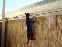 Aby kot nie uciekł z podwórka