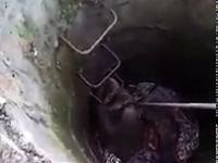 Ratowanie bobra